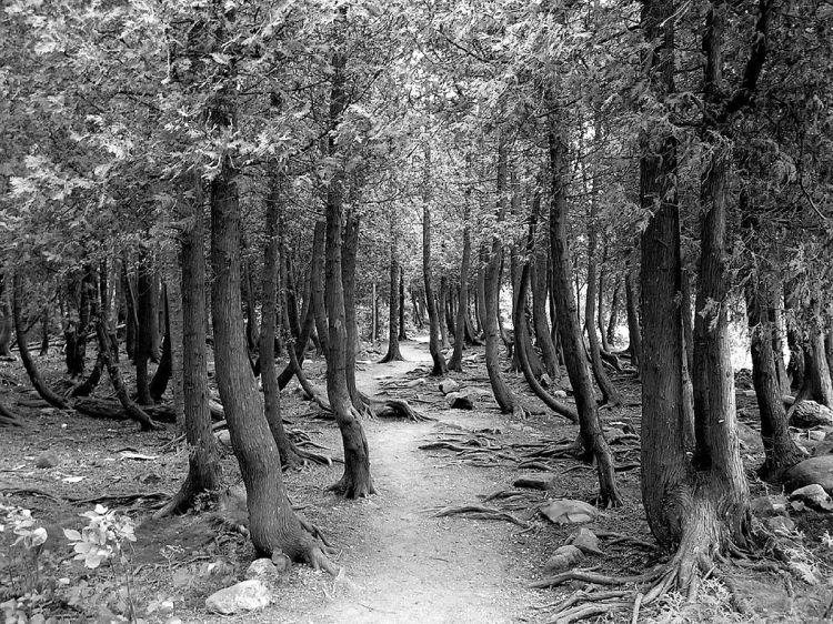 1024px-Bruce_Peninsula_Trail